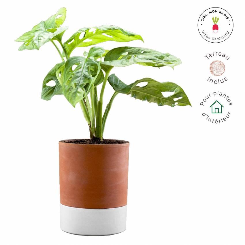 MAUD Pot de fleur fonctionnel JEANNOT / Ø 16 cm / Terra Cotta