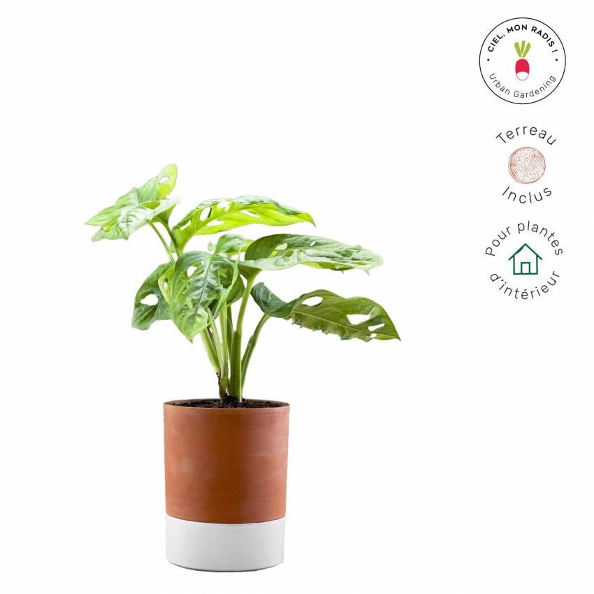 Pot de fleur fonctionnel JEANNOT / Ø 10,5 cm / Terra Cotta