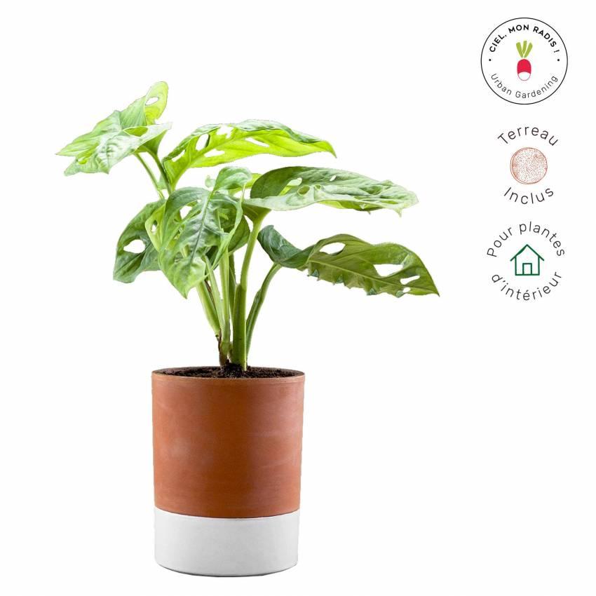 MAUD Pot de fleur fonctionnel JEANNOT / Ø 13,5 cm / Terra Cotta