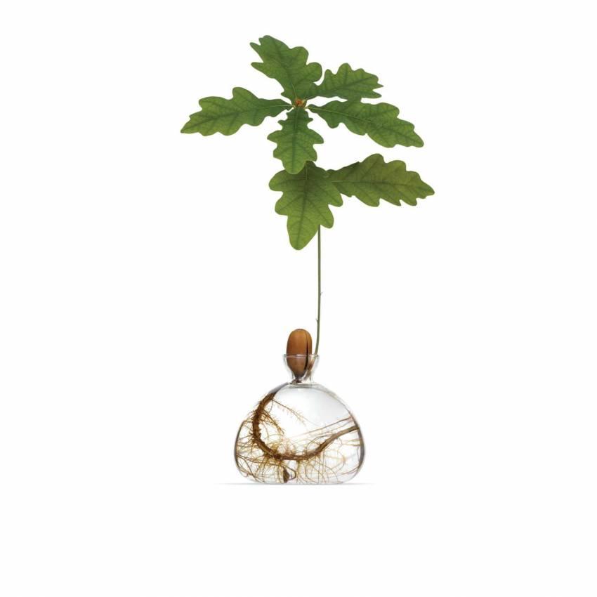 Vase ACORN en verre / Ø 10 cm