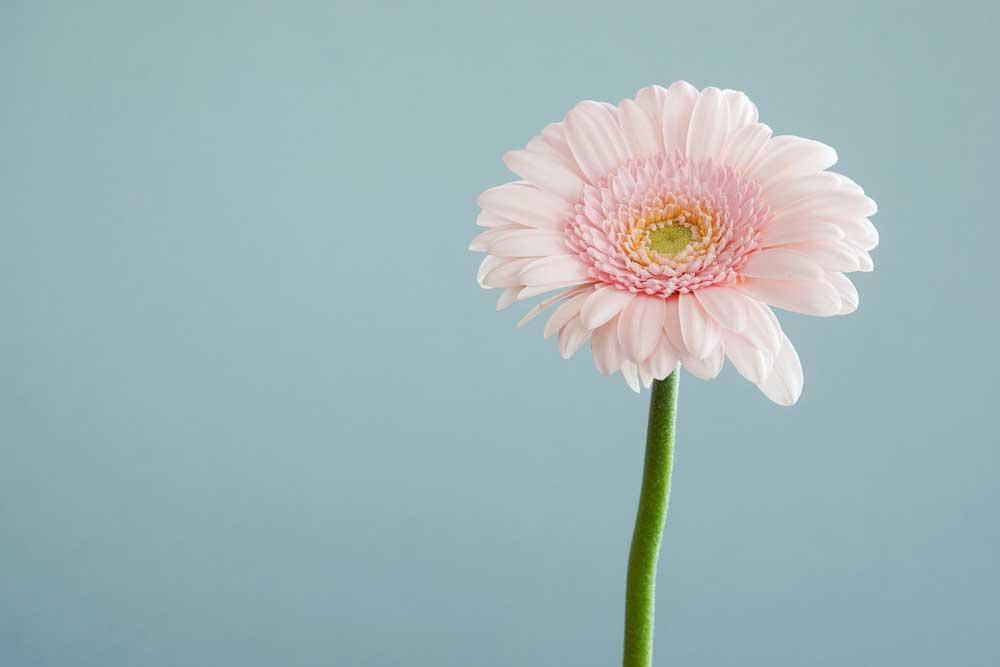 DIY compostions florales